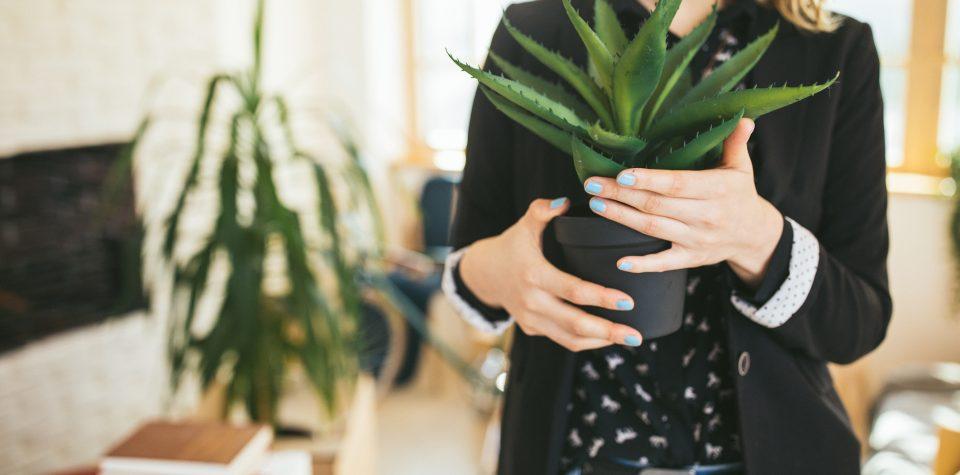 (Português do Brasil) Conheça as plantas e qual mais combina com a sua personalidade